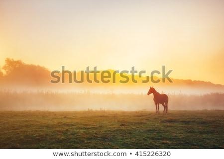 öreg · ló · legelő · fű · háttér · szépség - stock fotó © lightpoet