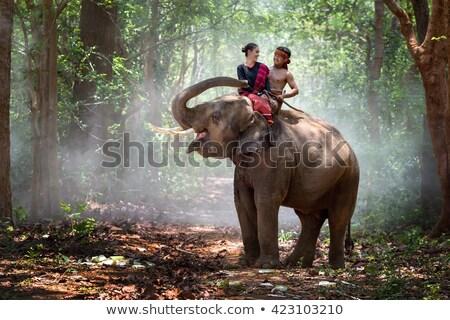Pretty model riding on the elephant Stock photo © konradbak