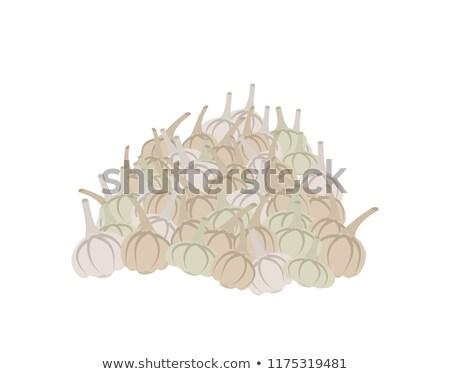 bunch of garlic. lot of vegetables. big crop on farm Stock photo © popaukropa