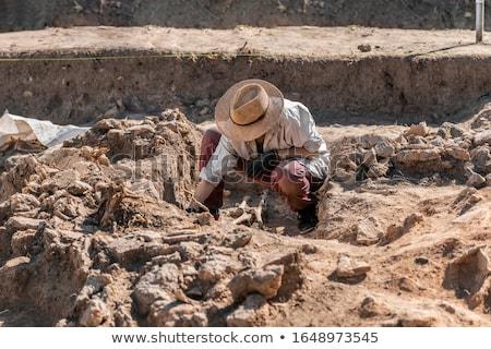 régészeti · ásatás · koponyák · fél · eltemetett · föld - stock fotó © klinker