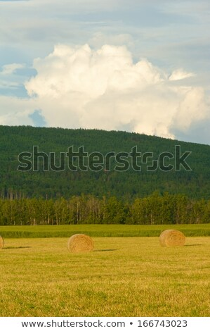 storm clouds behind hay bales stock photo © pictureguy