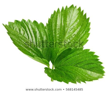friss · eprek · zöld · levelek · felső · kilátás · étel - stock fotó © yelenayemchuk