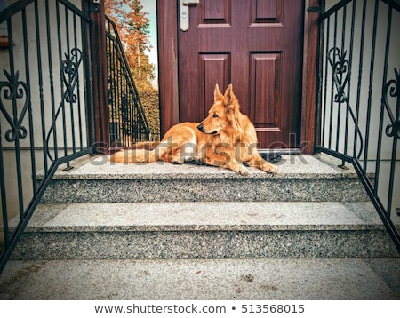 Dog is guarding the house Stock photo © adrenalina