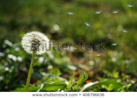gelişme · çiçek · hayat · deniz · circles - stok fotoğraf © psychoshadow