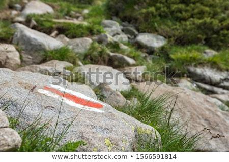 ハイキング · ルート · 公園 · 松 · 木 · ツリー - ストックフォト © Mps197