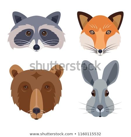 Animal set. Portrait in flat graphics - Raccoon Stock photo © FoxysGraphic