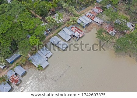 Cyclone hit the forest Stock photo © bluering