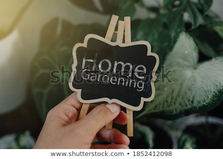 Fiatal nő kertész ül virágok növények üvegház Stock fotó © deandrobot