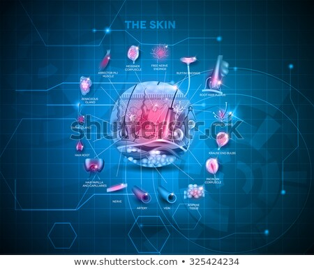 Stock fotó: Bőr · anatómia · részletes · struktúra · absztrakt · kék