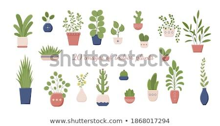 Houseplant in Flowerpot Isolated Cartoon Banner Stock photo © robuart