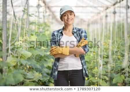 Szczęśliwy młoda kobieta pracy szklarnia piśmie zauważa Zdjęcia stock © deandrobot