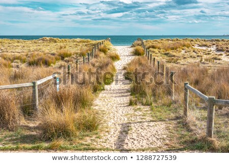 Dune grass escapes the fence Stock photo © jsnover