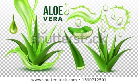 ayarlamak · aloe · gerçekçi · yeşil · bitki · yaprakları - stok fotoğraf © pikepicture