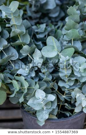 Vertical naturalismo sempre-viva folhas Foto stock © artjazz