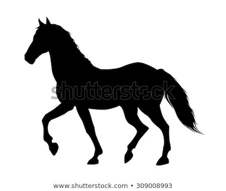 ストックフォト: セット · シルエット · 馬 · ジャンプ · 小さな · 種馬