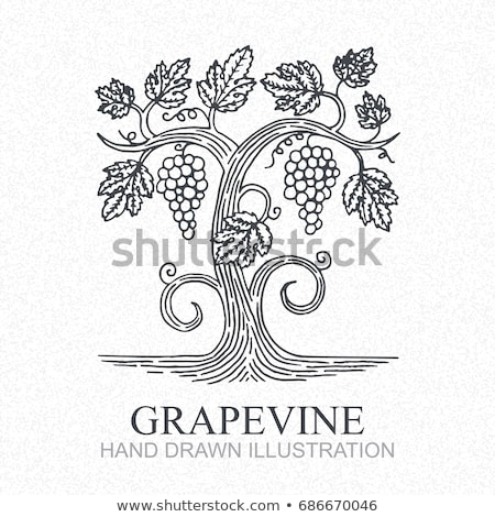 Stockfoto: Culture Of Vines And Grapes