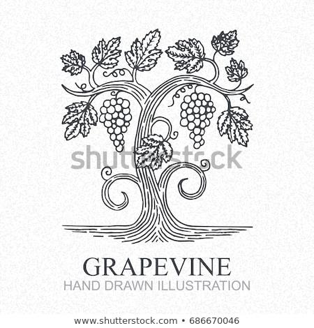 cultuur · wijnstokken · druiven · voedsel · natuur · bladeren - stockfoto © njaj