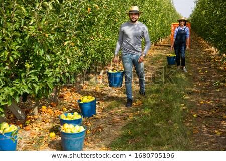 man gathering fruits Stock photo © photography33