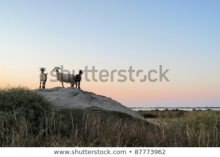 Naxos in Greece at evening time Stock photo © prill