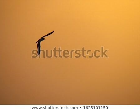 飛行 日没 飛行 シルエット オレンジ 空 ストックフォト © dbvirago