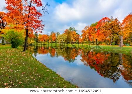 Autumn Scenic Stock photo © Gordo25