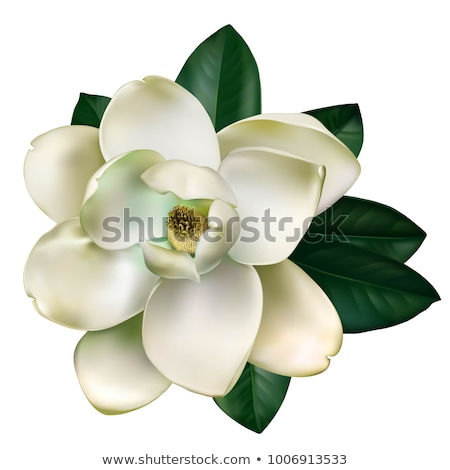 magnolia flower border frame stock photo © lightsource