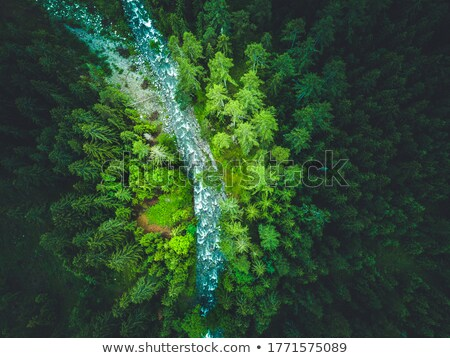 The river in the woods stock photo © azjoma