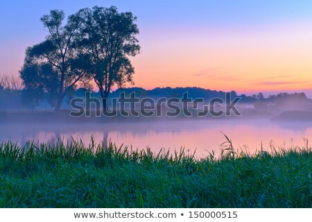 beautiful foggy sunrise over the narew river stock photo © bogumil