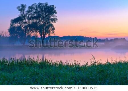 Beautiful Foggy Sunrise Over The Narew River Foto d'archivio © bogumil