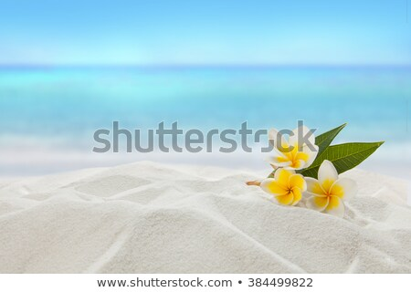 Beach Flowers Stock photo © rghenry
