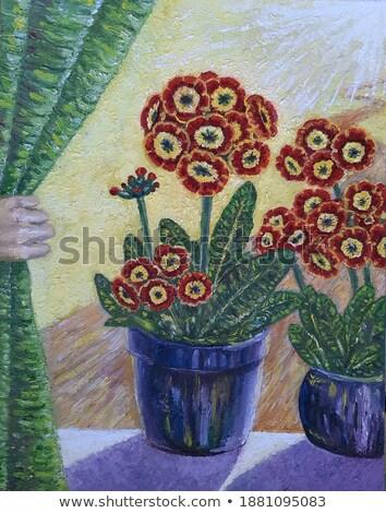 belo · vermelho · prímula · jardim · estoque - foto stock © zhekos