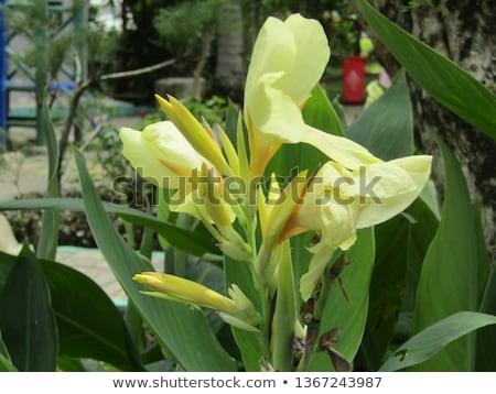 красочный · фон · лет · листьев · тропические · макроса - Сток-фото © antonihalim