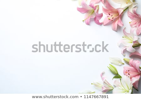 Zambak çiçek yalıtılmış beyaz dizayn yaprak Stok fotoğraf © anbuch
