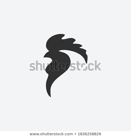 head of rooster  Stock photo © jonnysek