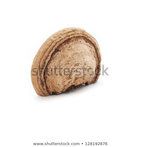 Grzyb drzewo charakter krajobraz Zdjęcia stock © ivonnewierink