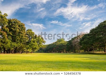 Открытый скамейке дерево трава природы Сток-фото © gewoldi