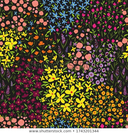 flower garden with rainbow stock photo © myosotisrock