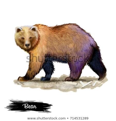 bruin · bont · illustratie · natuur · achtergrond - stockfoto © morphart