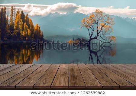 einsamen · Baum · Klippe · Silhouette · schönen · Sonnenuntergang - stock foto © mrakor