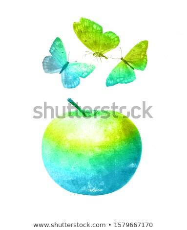 desenho · maçã · como · frutas · legumes - foto stock © darkves