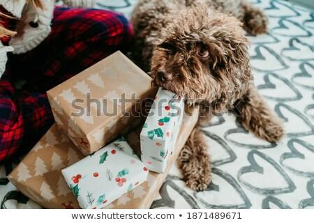 köpek · açılış · hediye · damga · hediye · kutusu · balonlar - stok fotoğraf © elgusser