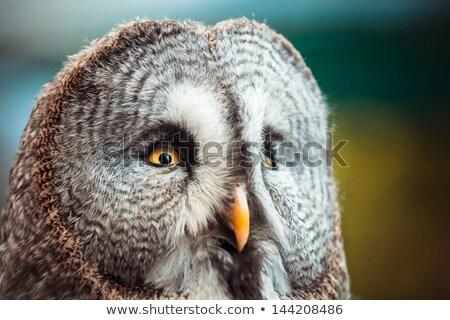 baby · uil · bos · ogen · vogel - stockfoto © lightpoet