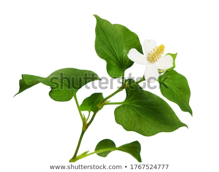 White fish and flower Stock photo © dmitroza