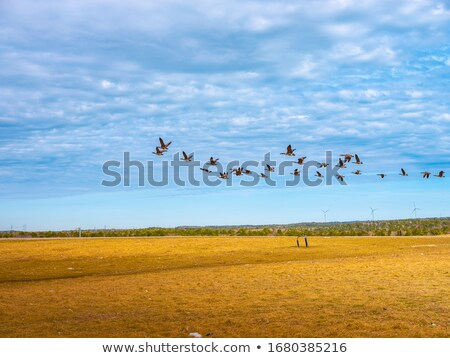Flock of birds flying over empty field Stock photo © stevanovicigor