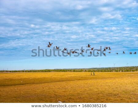 aves · voador · céu · Nova · Zelândia · natureza - foto stock © stevanovicigor