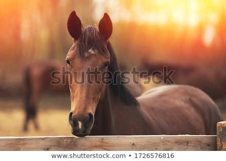 Friends at a stable Stock photo © IS2
