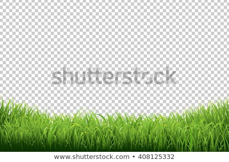 Сток-фото: Green Grass Borders Transparent Background