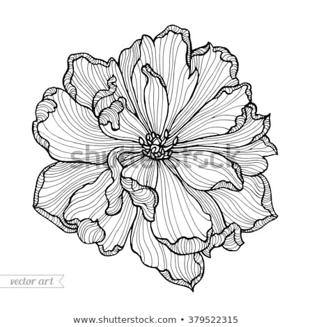 Foto stock: Beautiful Hand Draw Flower With Amazing Blossoms
