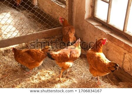 Kip veel kuikens illustratie achtergrond eieren Stockfoto © colematt