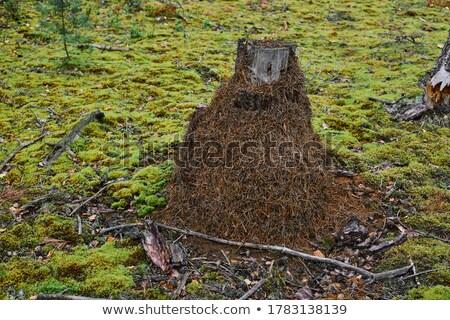 Muitos insetos em torno de árvore ilustração natureza Foto stock © colematt
